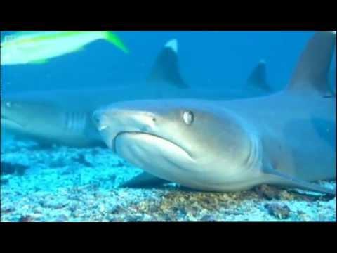 Not-Very-Scary-Shark Choir - Walk on the Wild Side - BBC