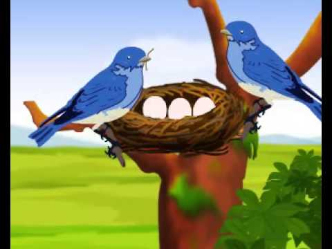 Two Little Blue Birds - Animated English Nursery Rhyme