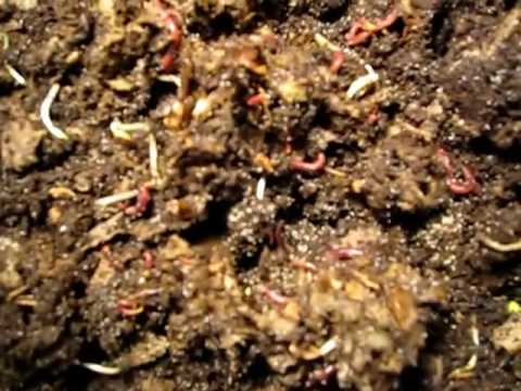 Worm Inn Vermicomposting - Part V