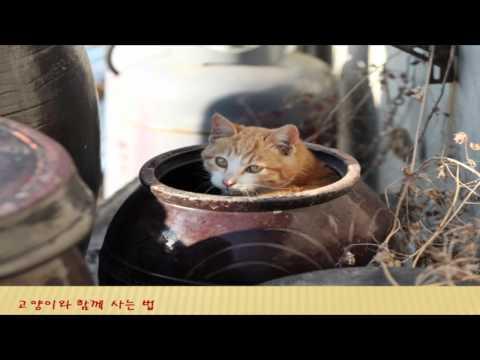 TEDxHaeundae - 이용한 - 고양이와 함께 사는 법 - 12/17/2011