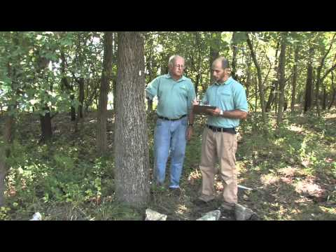 SHOUT Tree Banding Project with the Smithsonian