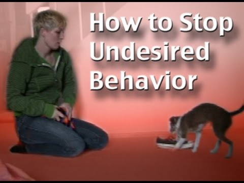 How to stop unwanted behavior- the positive interrupter- dog training clicker training
