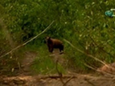 Gold Rush: Alaska- Bear Proofing
