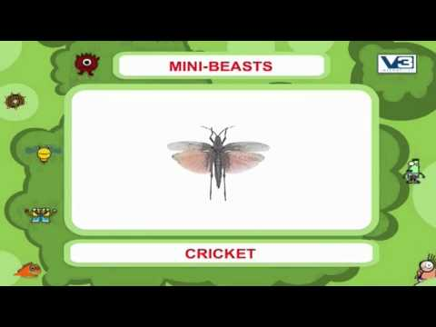 My First 1000 words on Mini Beasts