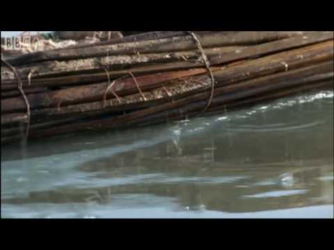 Animal life on the shores of the blue Nile - BBC Earth