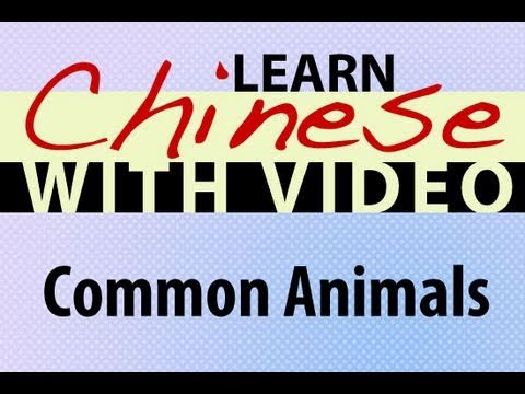 Learn Chinese with Video - Common Animals