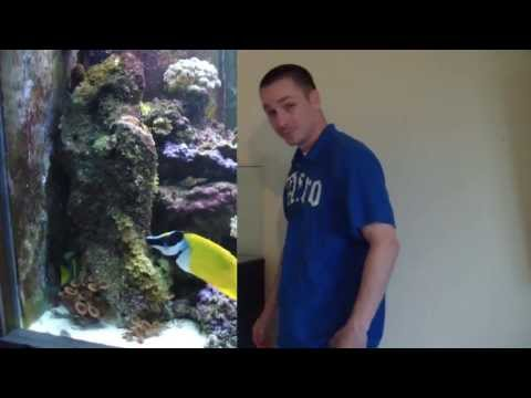 HOW TO: Set up a saltwater Nano aquarium
