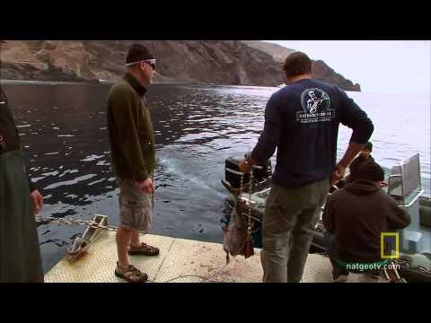 Shark Men - Blood in the Water