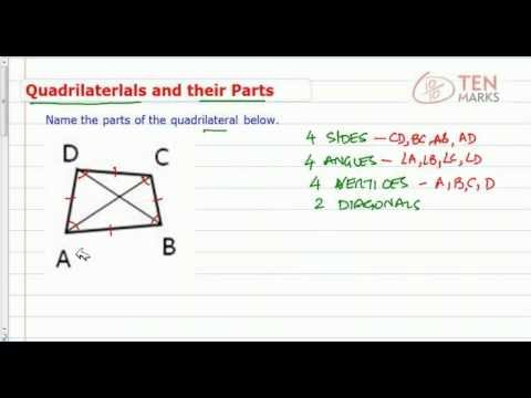 Quadrilaterals and Their Parts