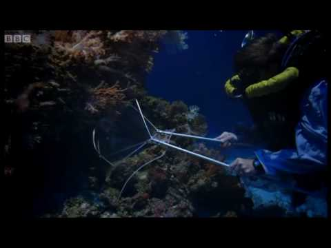 The fish collectors - Pacific Abyss - BBC
