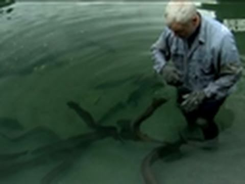 River Monsters: Bitten by Flesh-Ripping Eels