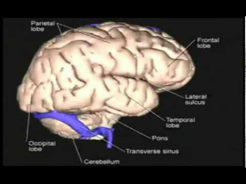 3D Human Brain Anatomy Layer by Layer