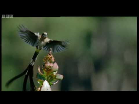 Birds flying over Cape Highlands - Wild Africa - BBC