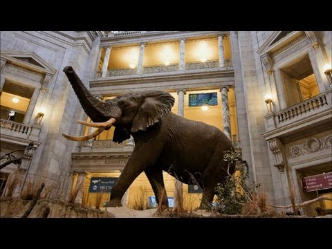 Smithsonian Spotlight - The Elephant in the Rotunda