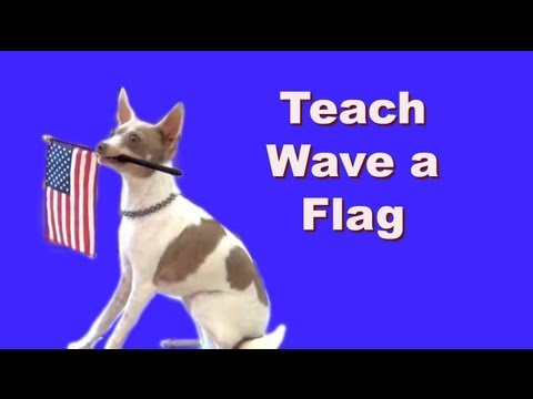 Wave a flag- dog tricks