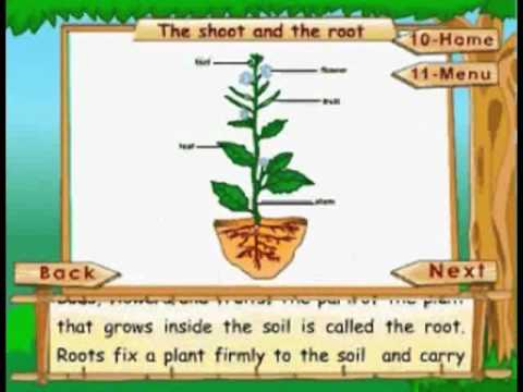 Kids Animation - The Shoot And The Root - Learn Series