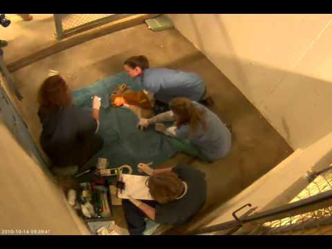 Shera's Cubs' Medical Exam