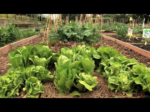Todd Forrest Introduces the Edible Garden