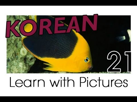 Learn Korean - Marine Animals Vocabulary
