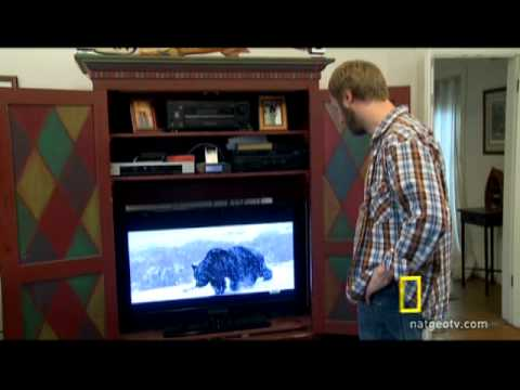 What To Do When A Grizzly Uses All Your DVR Space