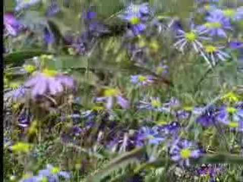 Nature of the hoverfly and butterfly - David Attenborough - BBC wildlife