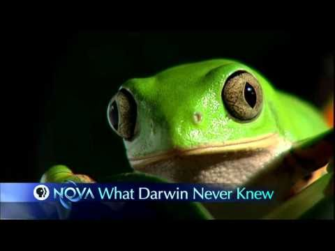NOVA | What Darwin Never Knew | PBS