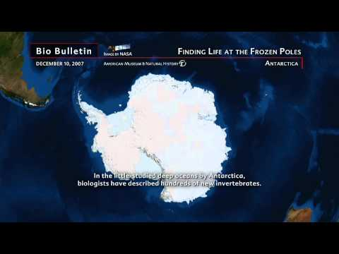 "Science Bulletins: Finding Life at the Frozen Poles"" Antarctica"