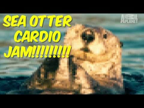 Wild Kingdom: Extreme Otter Workout