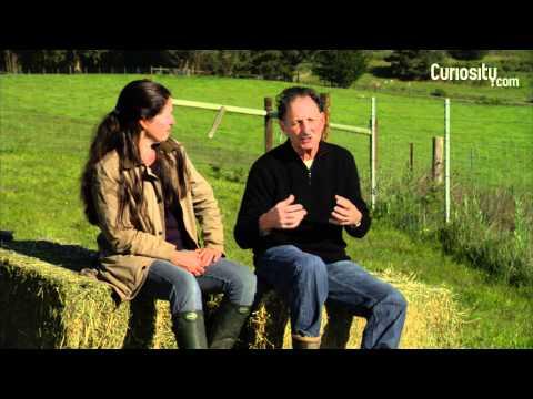 Nicolette and Bill Niman: On Mentors