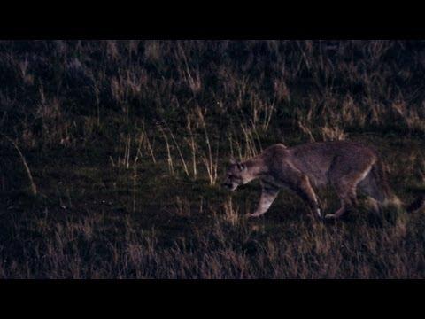 Untamed Americas - Puma Dinner Menu