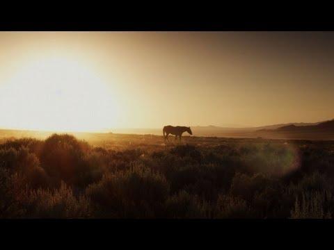 Untamed Americas - Misfit Mustang