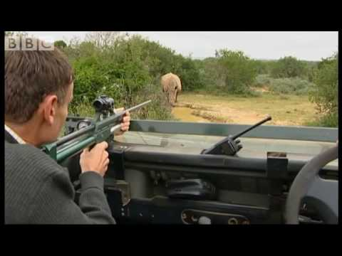 Wildlife Stories from South Africa - Moose in the Glen - BBC