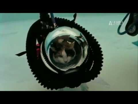 Weird, True & Freaky: Scuba-Diving Cat?