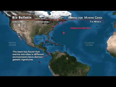 Science Bulletins: Fishing for Marine Genes