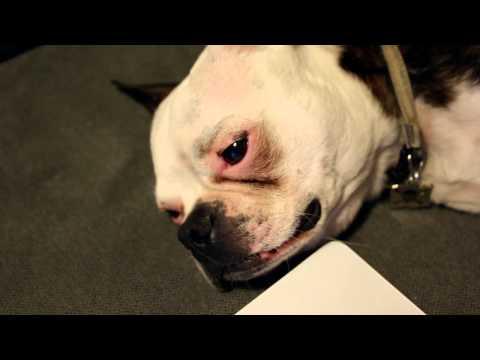 Stand-Up Dog: Gig