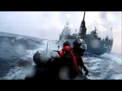 Whale Wars- The Shepherd's Crook