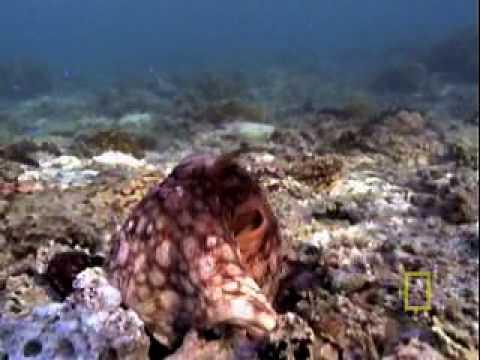 Octopus Escape