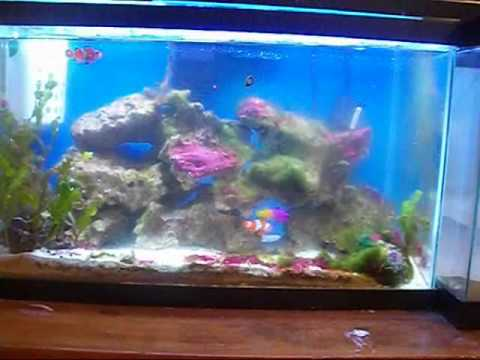 10gallon to a 20 gallon episode 9 part 1.wmv