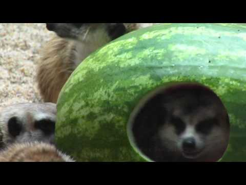 Don't touch my melon!