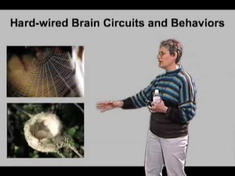 Catherine Dulac (Harvard Univ) Part 1: Sex and Smell: Chemosensory Detection