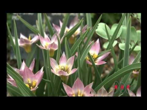 Royal Botanic Gardens, Kew (UNESCO/NHK)