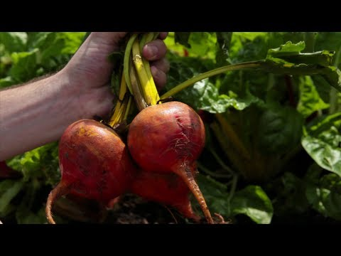 When to Plant Beets