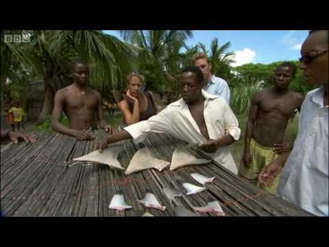 Shark fishing in Mozambique - Oceans - BBC