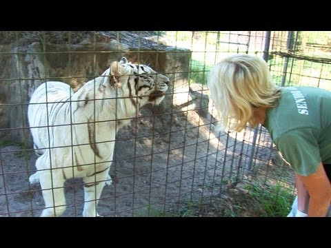 Talking to Tigers!