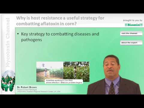 Why is host resistance a useful strategy for combatting aflatoxin in corn?