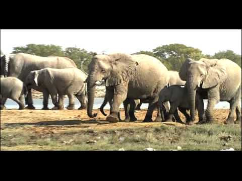 Populations Biotic Potential | Biology | Ecology