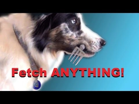Teach Your Dog to Fetch Anything!- clicker dog training tricks