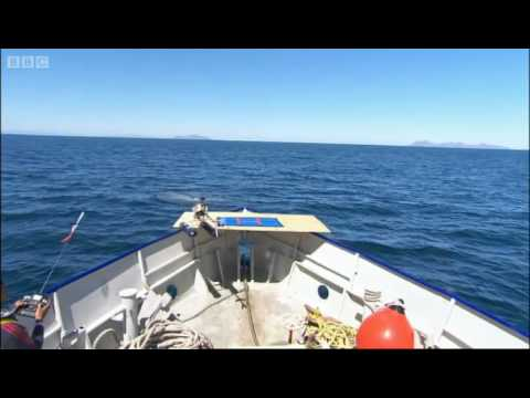 Taking a sample of whale's breath - Oceans - BBC