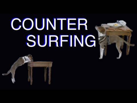 Solving Counter Surfing- Clicker Dog Training