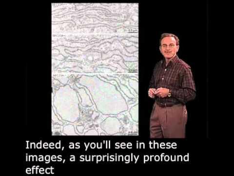 Randy Schekman (Berkeley) Part 3: Human Diseases of Vesicle Budding with English Subtitles